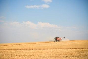 2015-Harvest-1