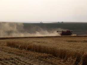 Harvest dust