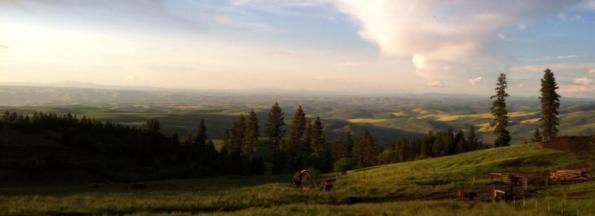 landscape-sunset-canola