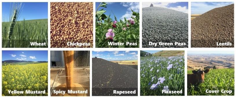 crops 2016 (2)
